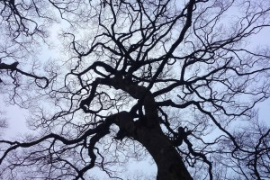 woodland-669737_1280